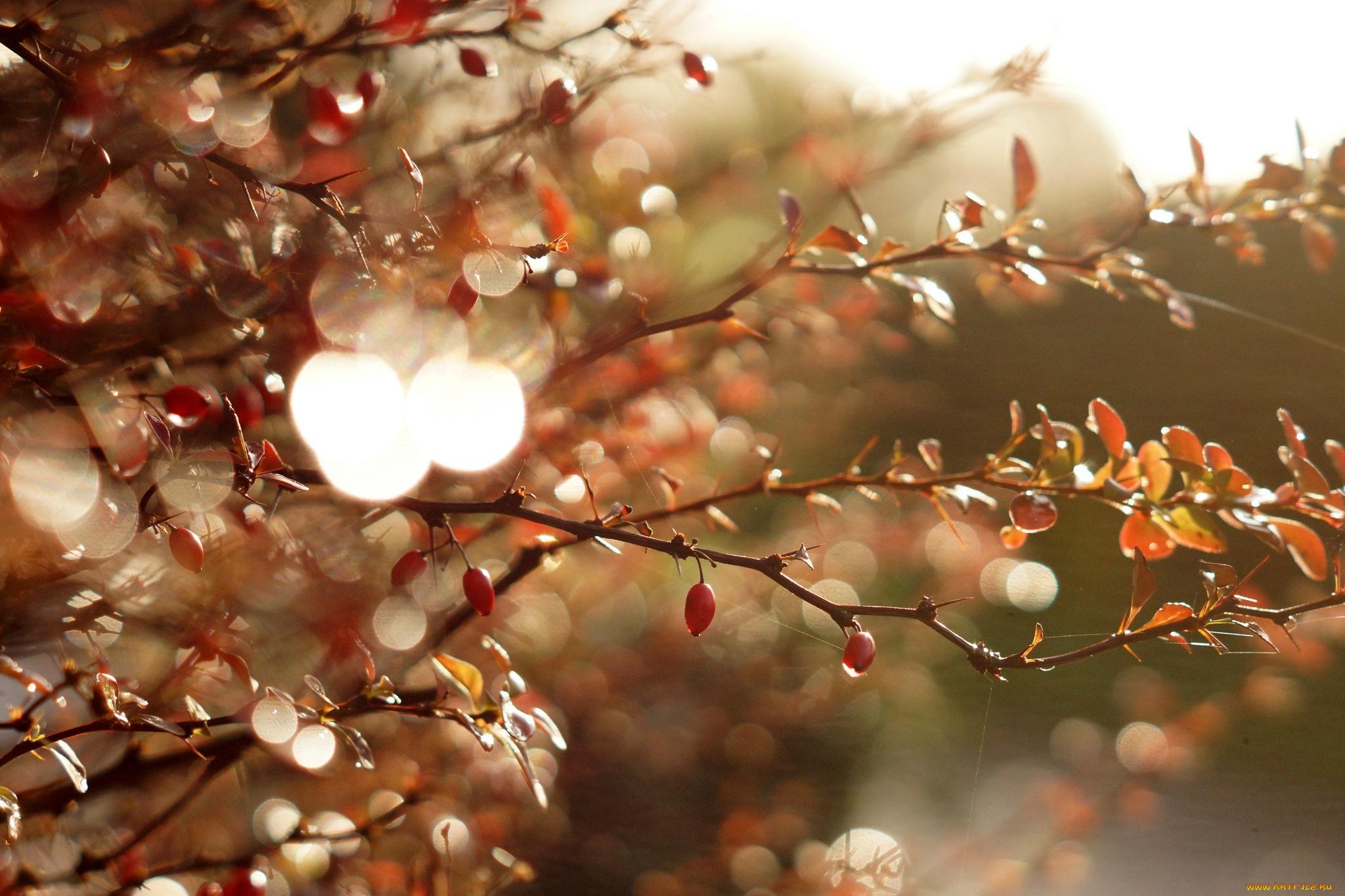 листья блеск leaves Shine без смс