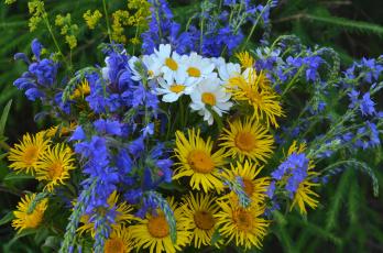 Картинка цветы луговые+ полевые +цветы девясил васильки ромашки
