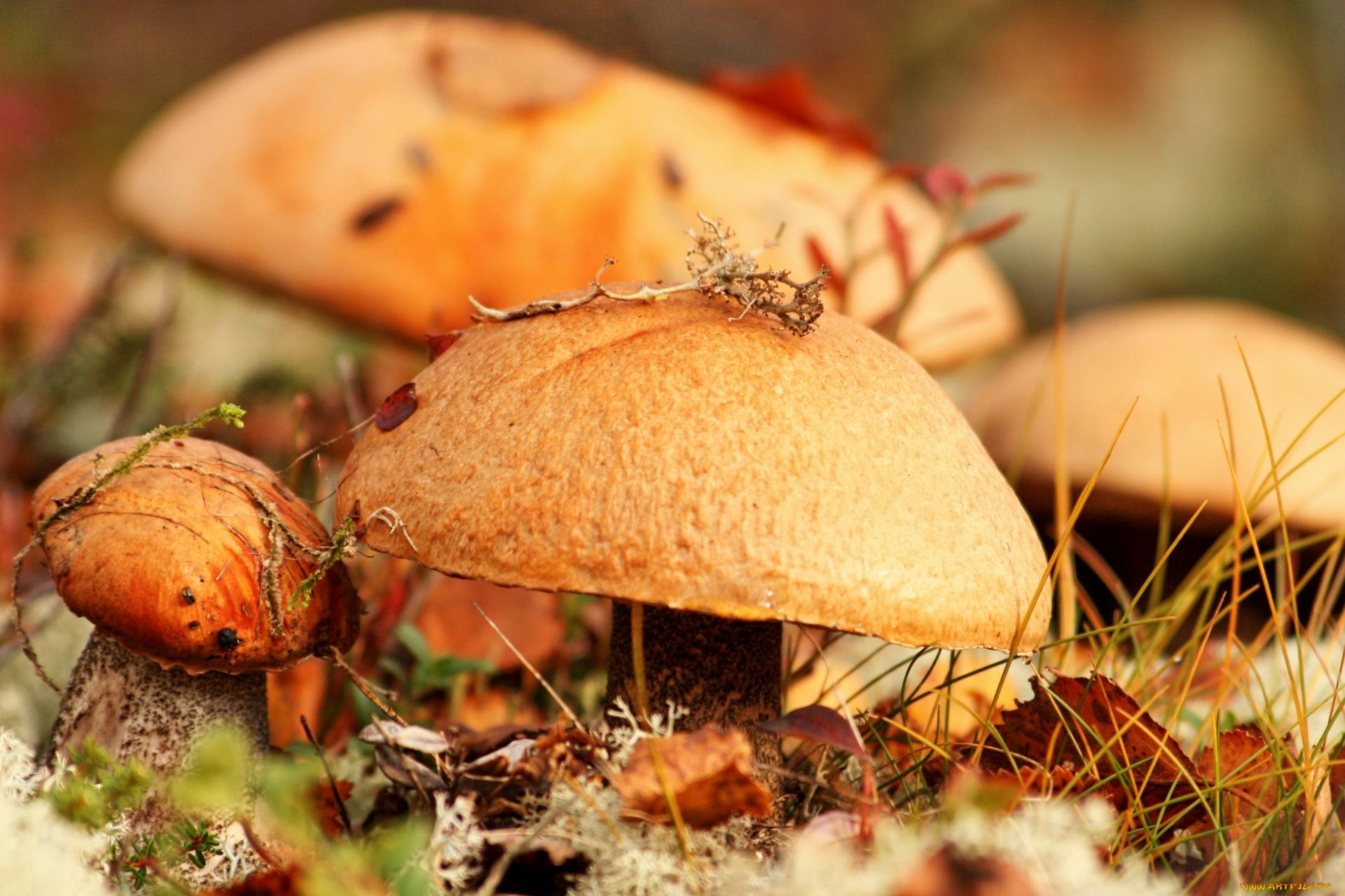грибы природа осень листья бесплатно