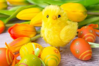 обоя праздничные, пасха, тюльпаны, цыпленок, яйцо