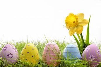 обоя праздничные, пасха, яйцо, нарцисс, белый, фон, трава