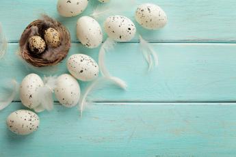 обоя праздничные, пасха, яйцо, перья, гнездо