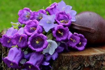обоя цветы, колокольчики, лето, полевые, натюрморт
