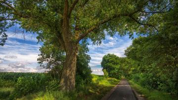 обоя природа, дороги, пейзаж, деревья, поле, закат, дорога