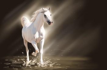 Картинка рисованные животные лошади лучи свет вода брызги белая лошадь