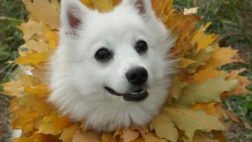 Картинка животные собаки морда взгляд