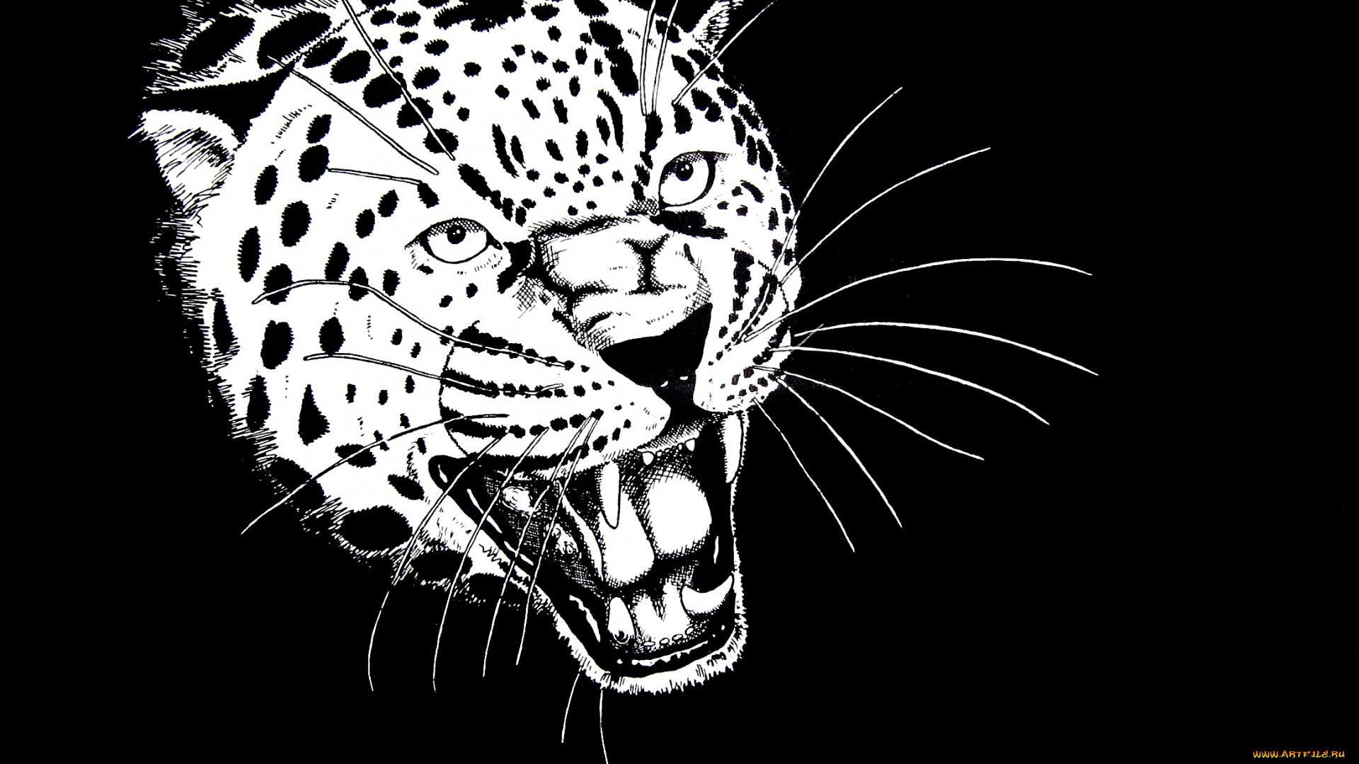 рисунок хищника животного именно для