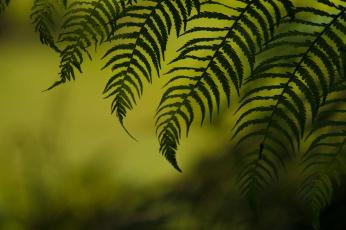 природа Папоротник листья загрузить