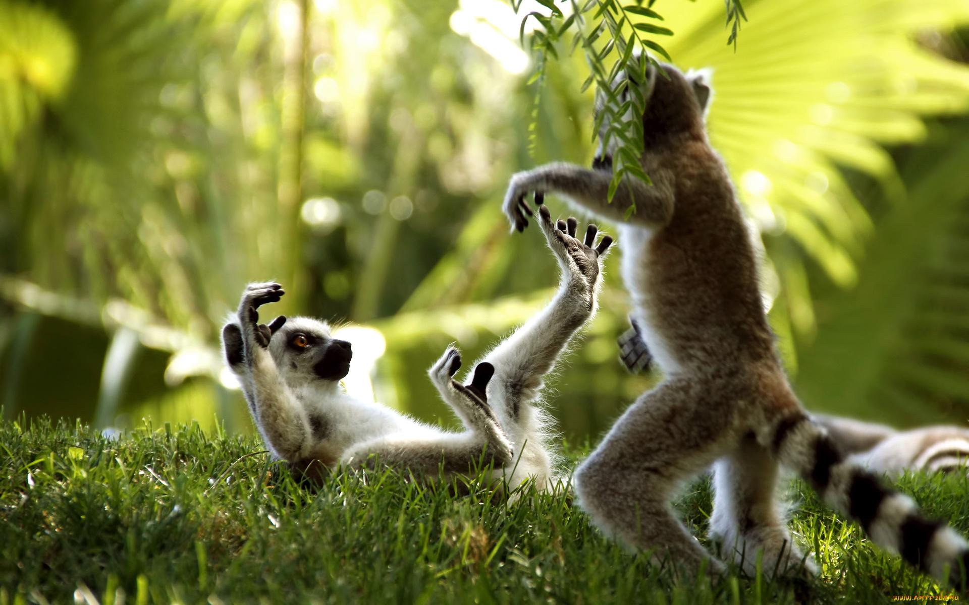 Картинки природы с животными красивые и смешные, приколы