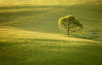 блондинка дерево поле blonde tree field  № 1377177  скачать
