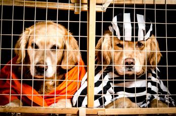 обоя животные, собаки, двое