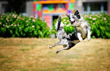 обоя животные, собаки, прыжок