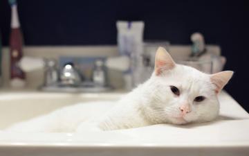 Картинка животные коты ванна белый кот