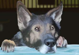 Картинка рисованные животные +собаки уши взгляд морда
