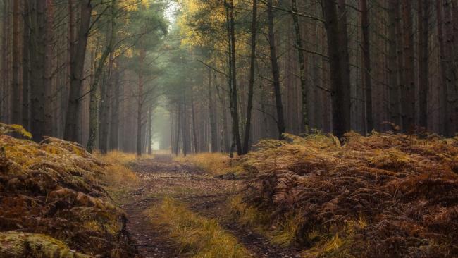 Обои картинки фото природа, дороги, дорога, лес