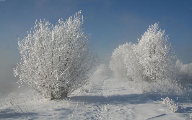 Обои картинки фото природа, зима, деревья, снег