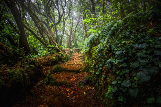Обои картинки фото природа, дороги, тропинка, лес