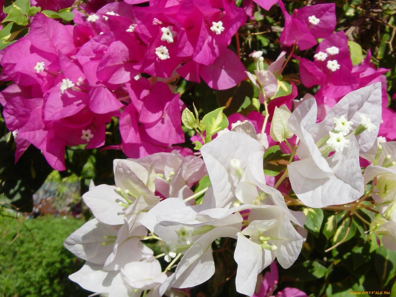 цветы египта названия и фото отряды осадили москву