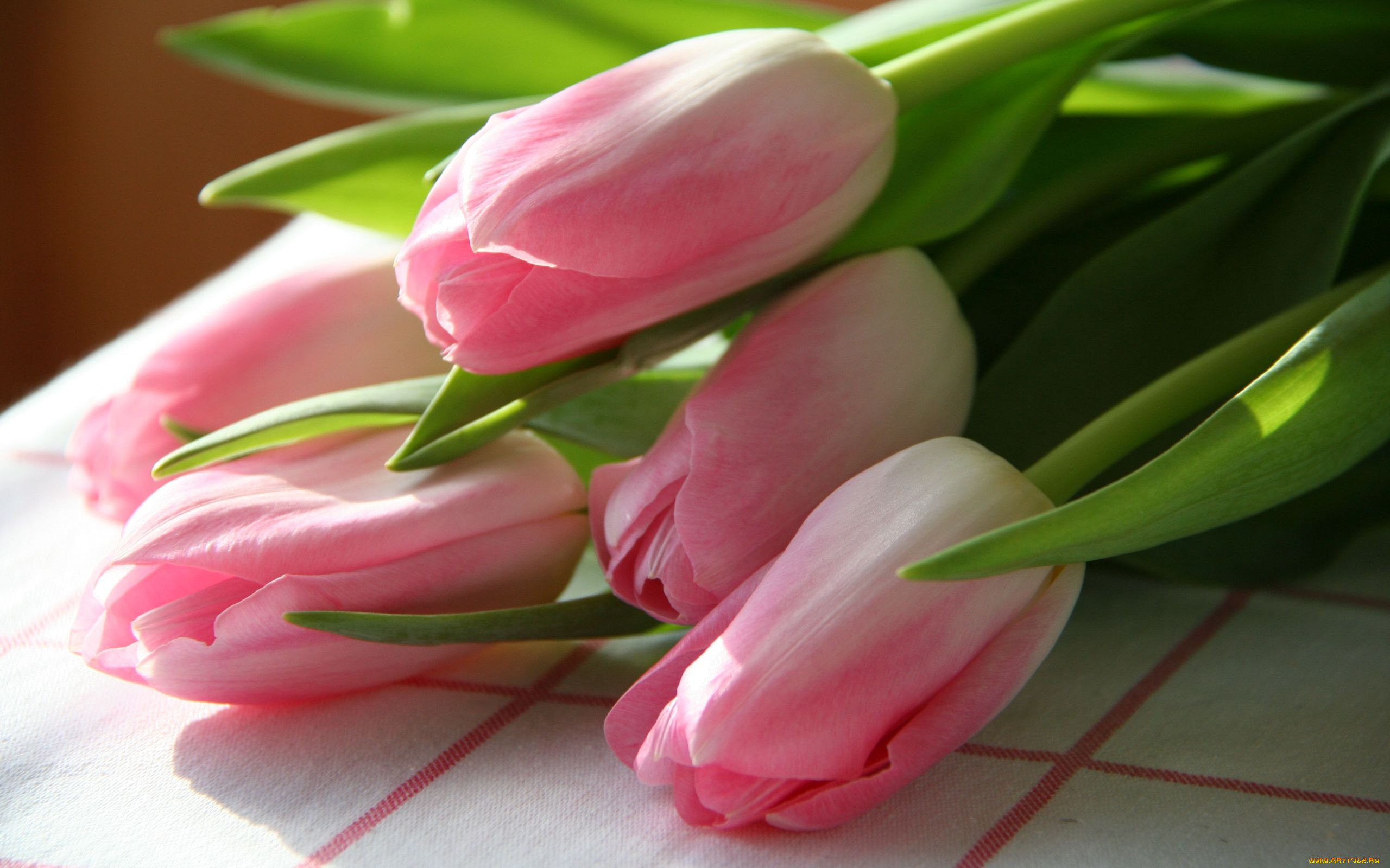 тюльпаны весна цветы без смс