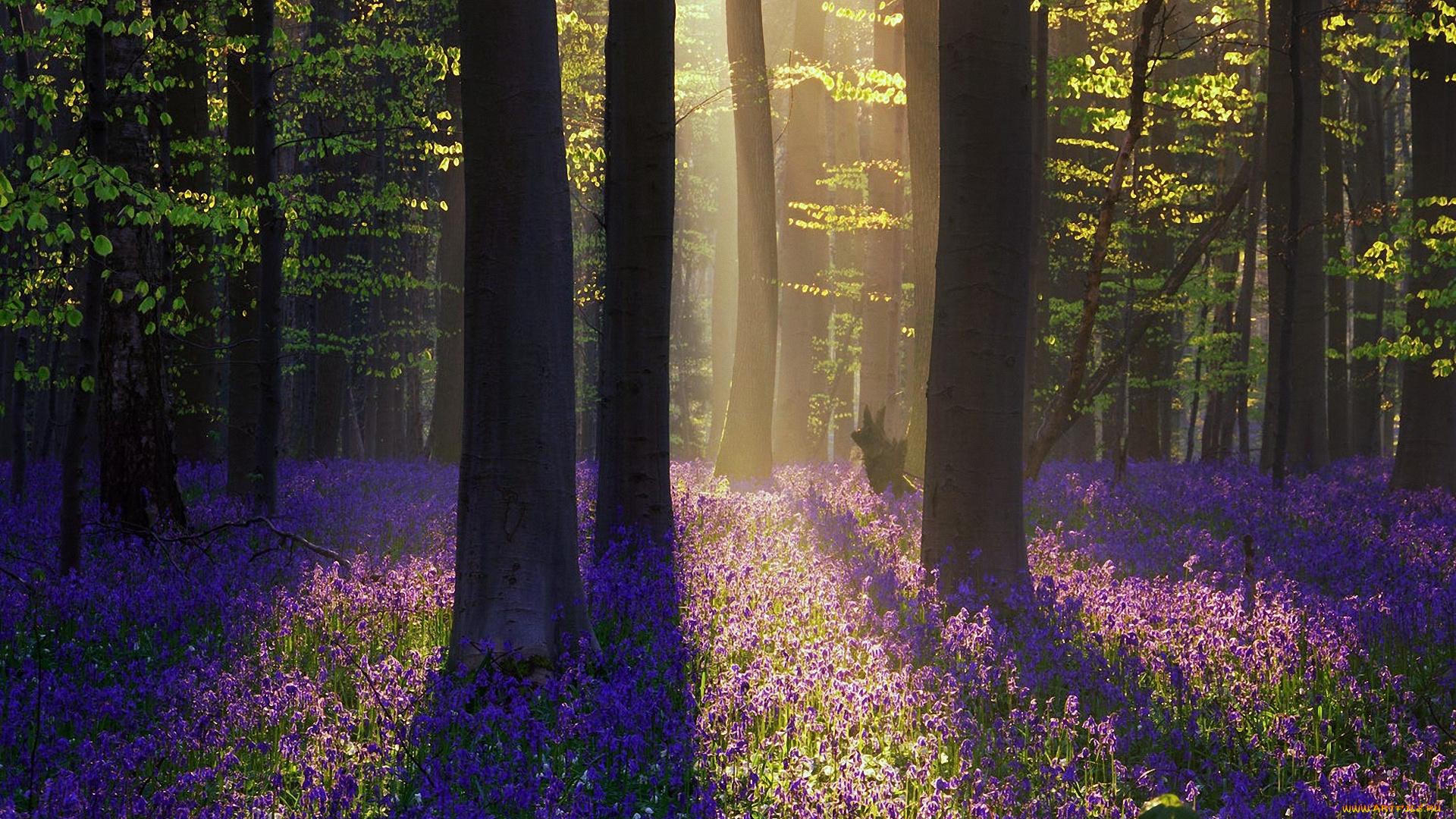 весной в лесу  № 113967 загрузить