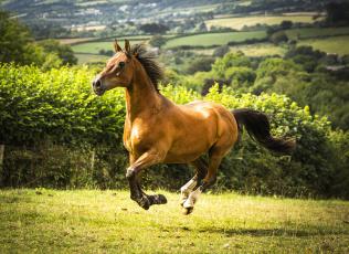 обоя животные, лошади, лошадка