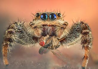 обоя животные, пауки, паучек