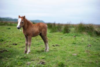 обоя животные, лошади, природа, фон, жеребёнок