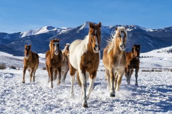 обоя животные, лошади, лошадки