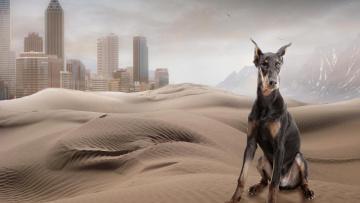обоя разное, компьютерный дизайн, доберман, холмы, пески, собака, город