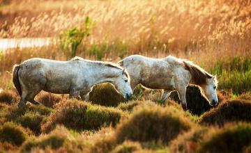 обоя животные, лошади, трава, луг, кочки