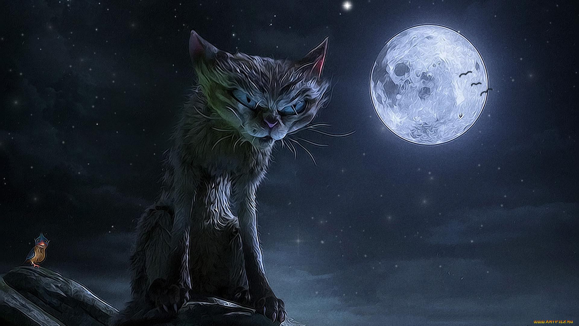 Котики на фоне луны картинки