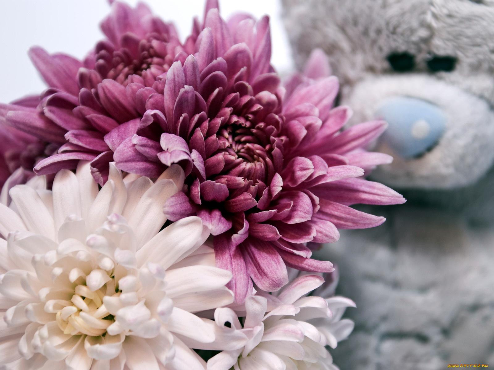 Белые хризантемы на фото и открытках