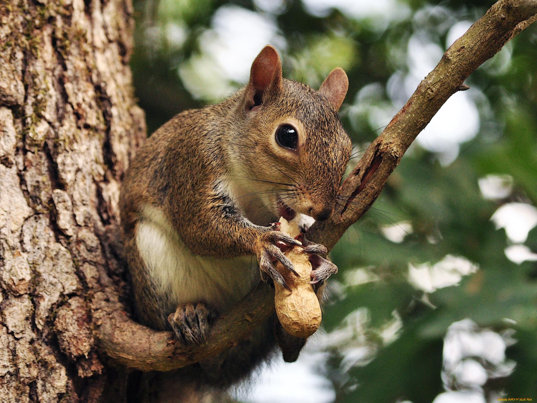 природа осень животное корзина семечки белка  № 2096046 без смс