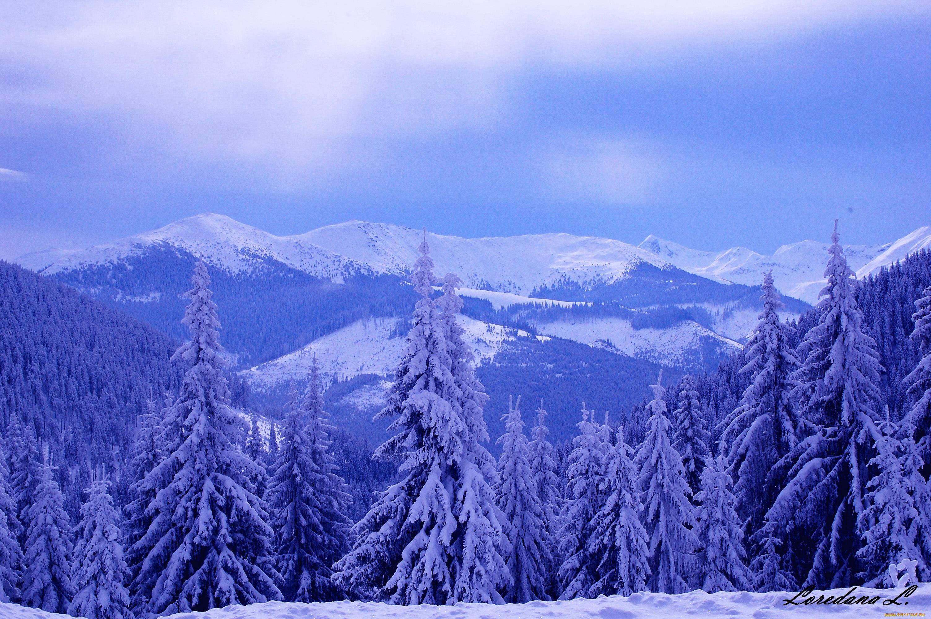 природа скалы деревья горы снег зима nature rock trees mountains snow winter  № 455814  скачать
