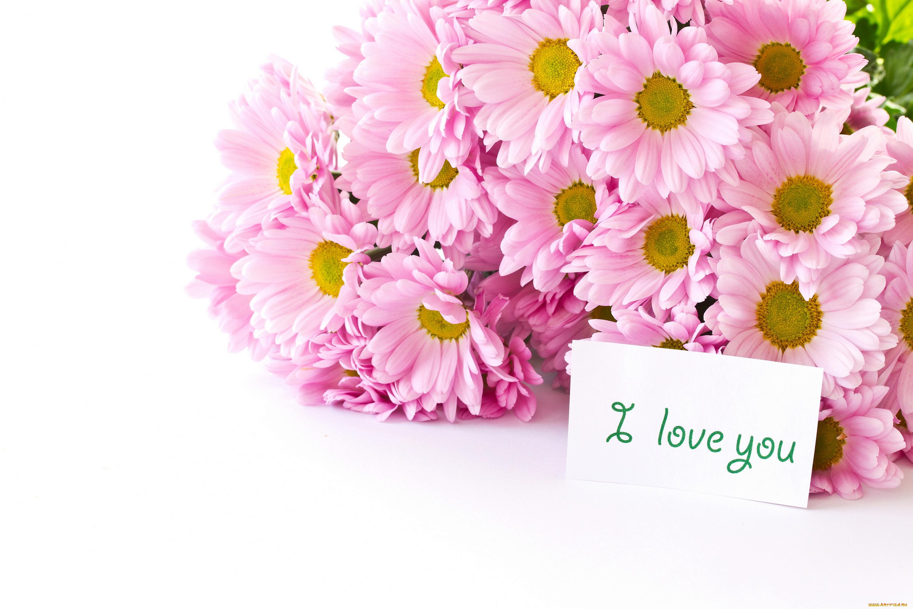 Хризантемы на открытке, открытки разным