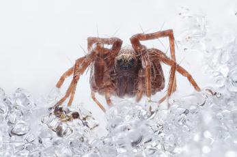 Картинка животные пауки макро