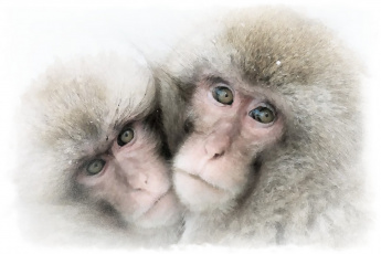 обоя рисованное, животные,  обезьяны, акварель, обезьяна