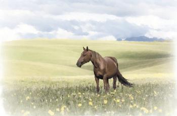 обоя рисованное, животные,  лошади, трава, природа, поле, рисунок, лошади, акварель