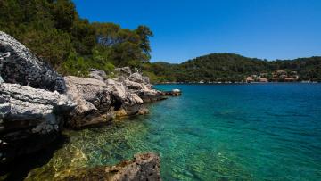 Картинка природа побережье море берег лес