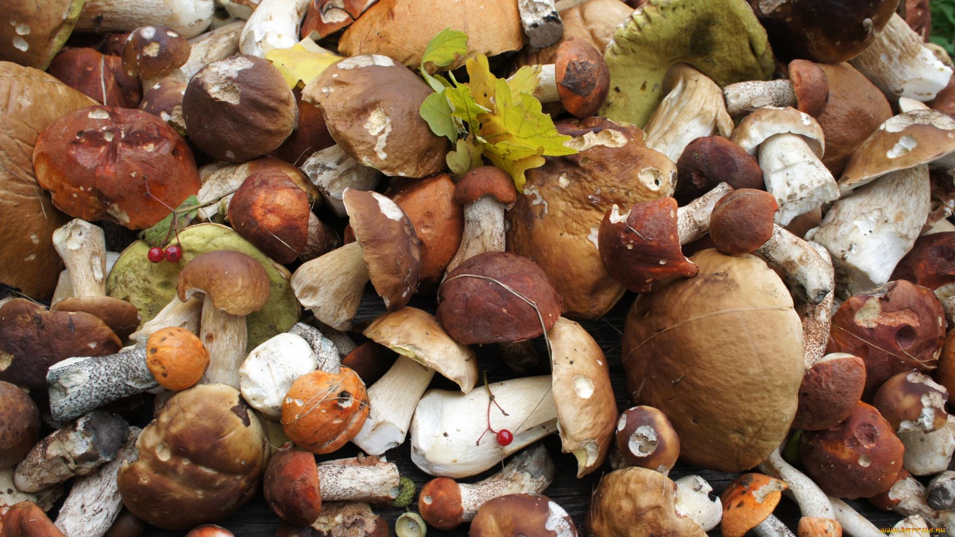 Много грибов на одной картинке