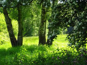 Картинка природа деревья лето трава парк