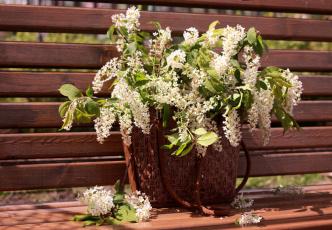 Картинка цветы цветущие деревья кустарники черемуха