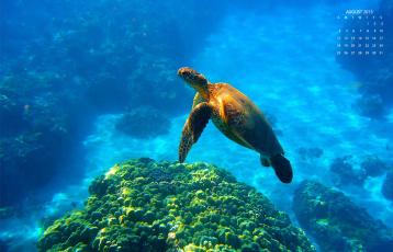 Картинка календари животные черепаха море