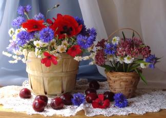 Картинка цветы луговые+ полевые +цветы васильки маки ромашки