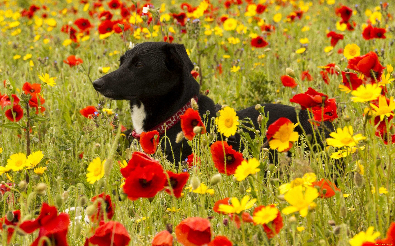 собака трава в поле бесплатно