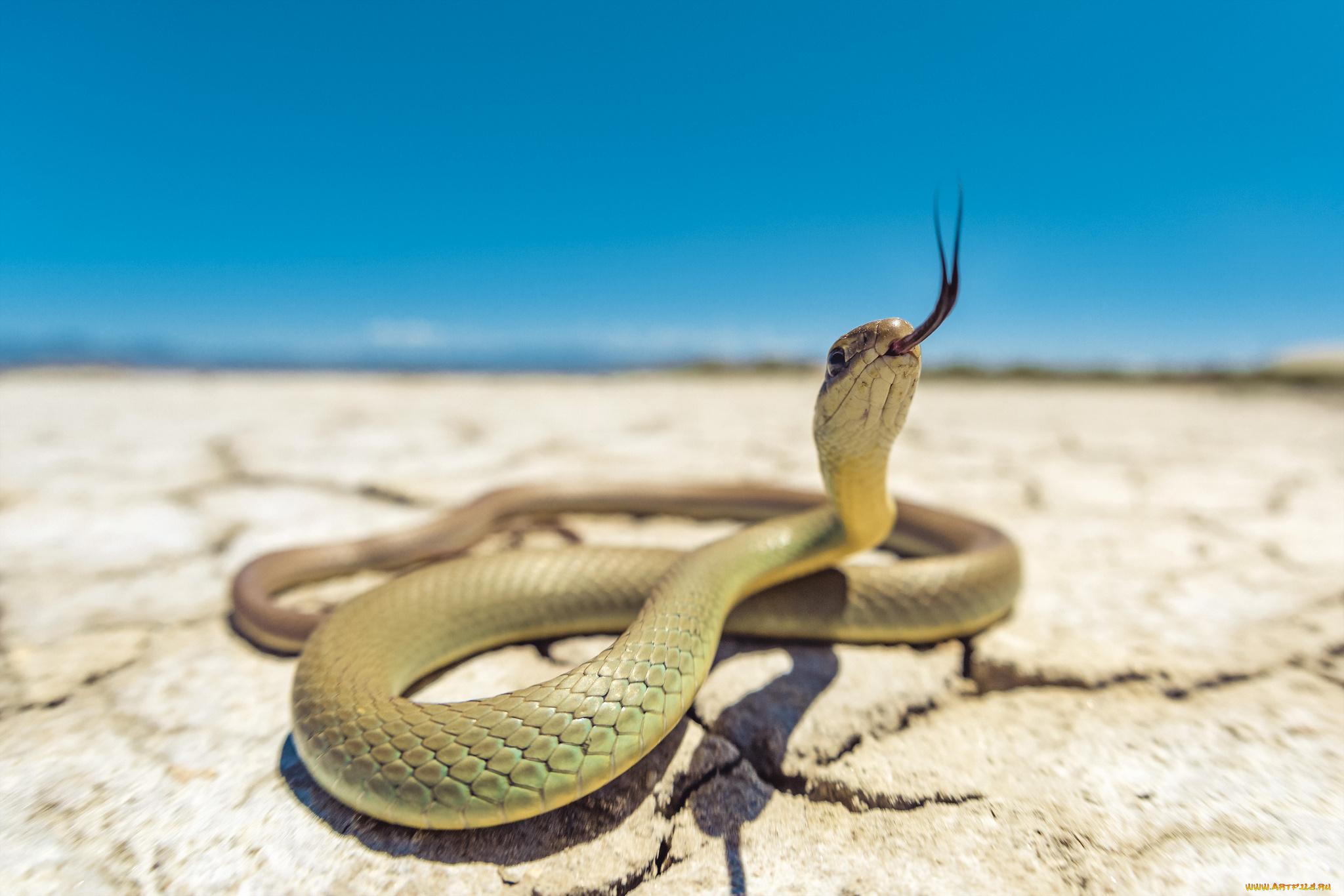Обои Змей На Рабочий Стол
