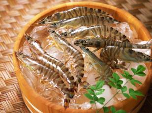 Картинка еда рыба +морепродукты +суши +роллы бочка креветки лед морепродукты зелень