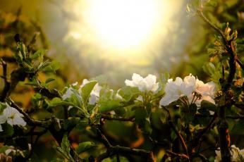 обоя цветы, рододендроны , азалии, цветение, дерево, весна, природа, ветки