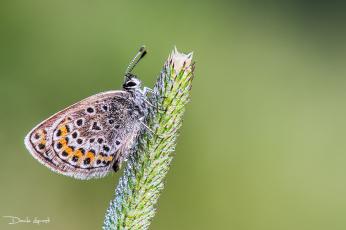 Картинка животные бабочки +мотыльки +моли насекомое растения природа бабочка фон