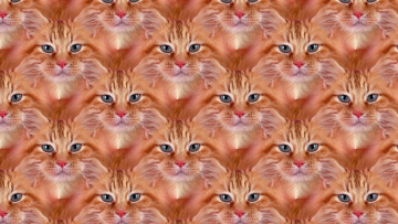 обоя разное, компьютерный дизайн, фон, кошка, взгляд